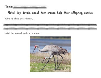 Cranes ~ Bird Adaptations