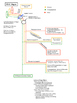 Cranial Nerve Pathways - Quick Physiology Review Note and Outline