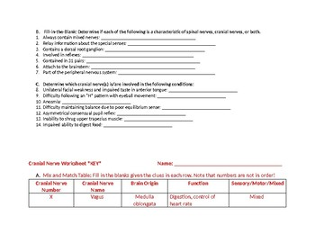 Cranial Nerve review worksheet table spinal nerve comparison with Key
