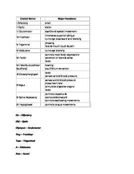 Cranial Nerves Mnemonics (Anatomy Handout/Outline)