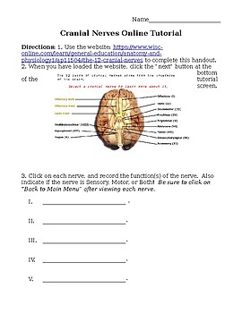 pictures cranial nerves worksheet leafsea. Black Bedroom Furniture Sets. Home Design Ideas