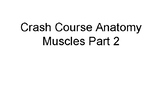 Crash Course Anatomy Muscle Part II Cornell Style Notes