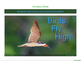 Crawl, Hop, Swim or Fly - Rainforest Animal Types EPUB
