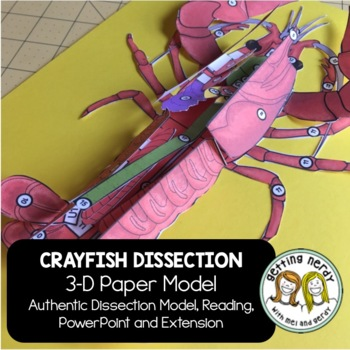 Crayfish Paper Dissection - Scienstructable 3D Dissection Model | TpT