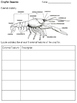 Crayfish Dissection Lab Pack ~ Focus on Animal Adaptations