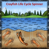 Crayfish (Life Cycle Spinner)