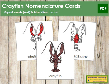 crayfish nomenclature cards (red) crayfish nomenclature cards (red)