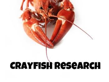 Crayfish Research