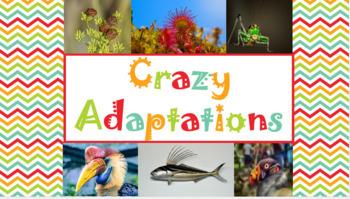 Crazy Adaptations PowerPoint/Slideshow