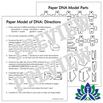 Create Paper Dna Structure Model Activity Simple Instructions Ngss