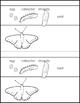 Create a Butterfly Bracelet ★ FREEBIE ★