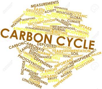 Create a Carbon Path