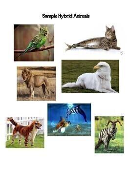Create an Animal Writing Activity: Fun Informative & Explanatory Writing Lesson