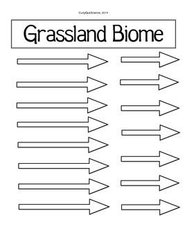 Food Web/Chain Activity Grassland Biome