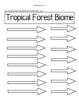 Create a Food Web/Chain Activity Tropical Rainforest Biome
