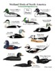 """Create a """"Ducks of North America"""" Long Poster"""