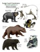 """Create a """"Large Land Carnivores of the World"""" Long Poster"""
