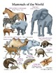 """Create a """"Mammals of the World"""" Long Poster"""