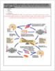Creating Body System Interactions Model