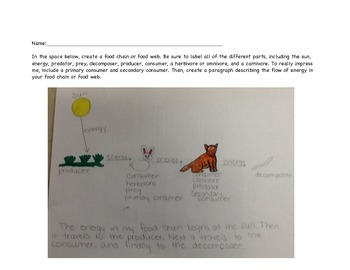 Creating Food Chains