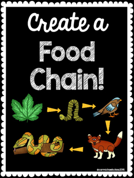 Creating a Food Chain