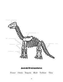 Creation and Kids - Fossils and Dinosaurs - Prek-3