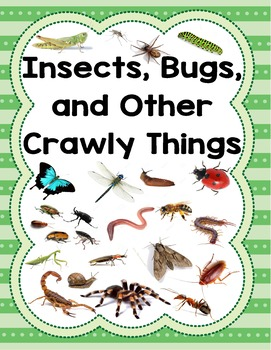 Creative Curriculum Insect Study Bundle