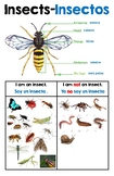 Creative Curriculum Insect Study Definition Poster