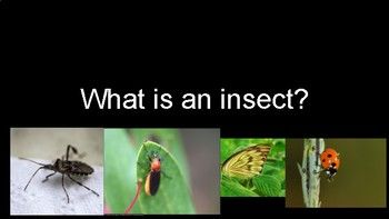 Creative Curriculum Insect Study Insect Info Slides
