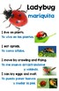 Creative Curriculum Insect Study Poster Set