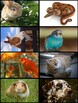 Creative Curriculum Pets Study Supplemental Materials
