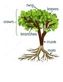 Creative Curriculum Trees Study Visuals