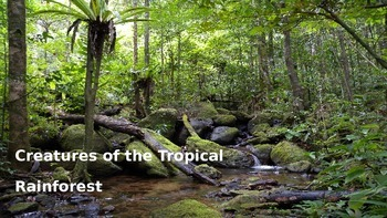 Creatures of the Rainforest Presentation for grades 2-5 ~ 20-25 mins