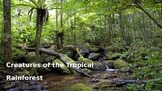 Creatures of the Rainforest Presentation for grades 2-5 ~