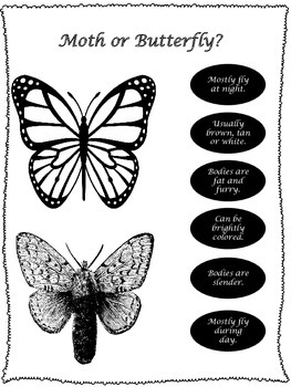 Creeping Caterpillar to Beautiful Butterfly:  Common Core Comprehension Packet