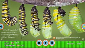 Creepy But Cool Caterpillars INTERACTIVE VERSION