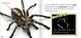 Creepy But Cool Spiders INTERACTIVE VERSION