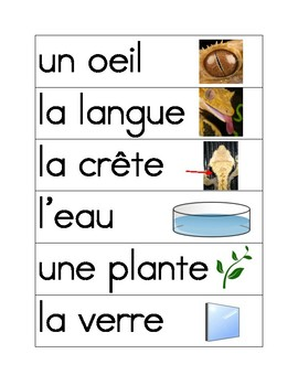 Crested Gecko Vocab cards French
