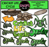 Cricket Life Cycle Clip Art Set {Educlips Clipart}