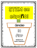 STEM: Ciencias:  Crisantemo (Spanish) (español)