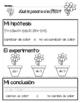 STEM: Ciencias:  Crisantemo (Spanish) (español)