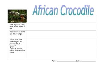 Crocodile Graphic Organizer