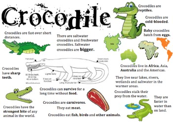 Crocodile Information Report Visual
