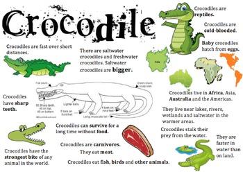 Crocodile Information Report Visual