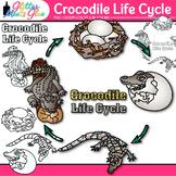 Crocodile Life Cycle Clip Art: Animal Group Graphics {Glitter Meets Glue}