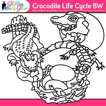 Crocodile Life Cycle Clip Art {Teach Animal Groups, Habitats, and Adaption} B&W