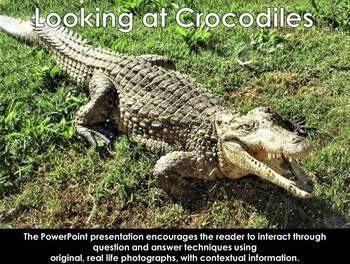 African Reptiles: Crocodile - Interactive PowerPoint Presentation
