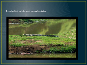 Crocodiles Powerpoint