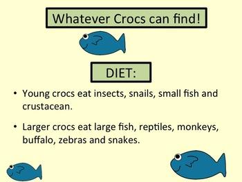 Crocodilian! Crocodile Lesson Plan, 2 PPTs, and Worksheets