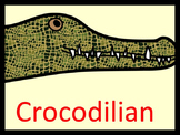 Crocodilian! Crocodile Lesson Plan, 2 PPTs, and Worksheets